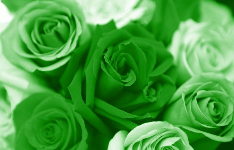 green valentines day