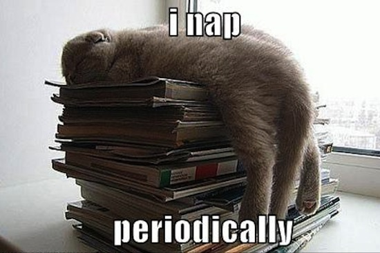 funny pictures cat napping magazines